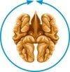 Synchronizacja półkul mózgowych test