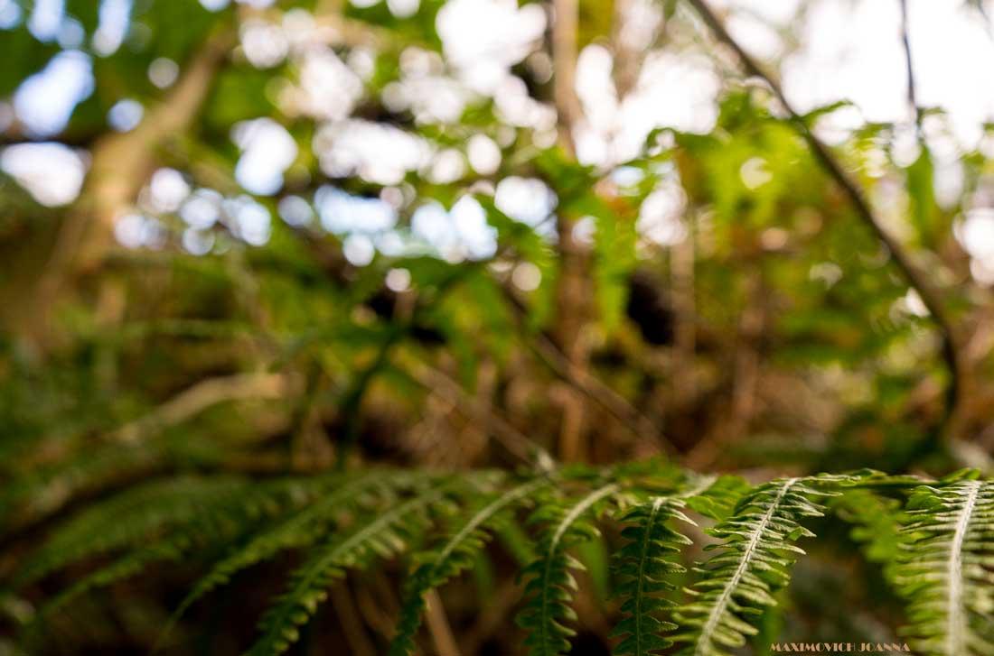 zatrzymaj się w lesie