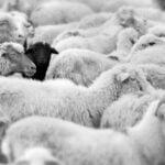 Czarne owce. Uzdrowiciele rodzin.